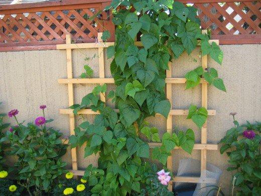 Easy vertical gardening ideas for beginners how to build a for Garden trellis designs photos