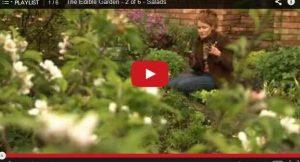 alys-fowler-garden-show-611x330