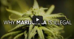 marihuana end days