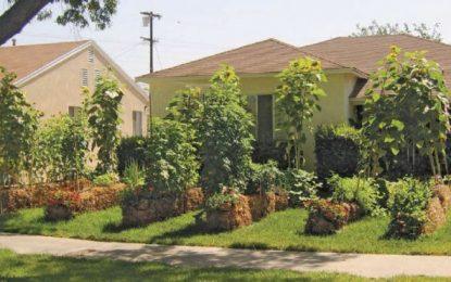 Straw Bale Gardening: Straw Bale or Hay Bale Gardens?